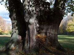 Trädvårdsplaner för kyrkogårdar i Balingsta och Vattholma pastorat utanför Uppsala